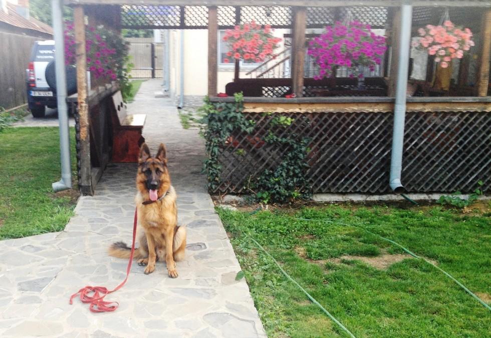 Iago Dog Cosmino
